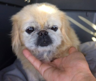 Mooshu was missing for 10 years when she was rescued by a Good Samaritan.