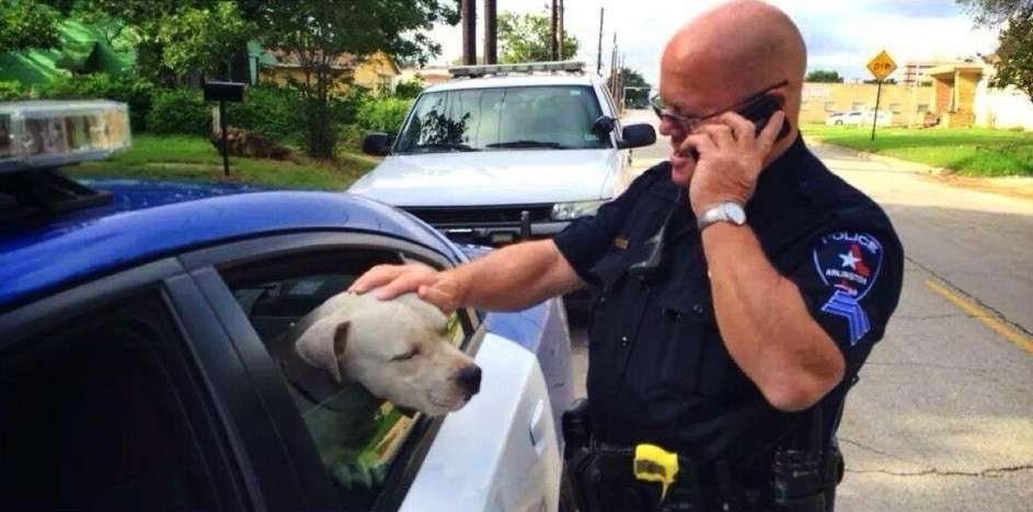 Cop responds to report of 39 aggressive 39 stray pit bull for Gary carter vet