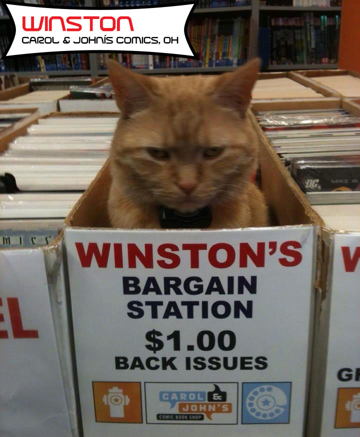 12 Cats Who Live In Comic Book Stores (And May Secretly Be