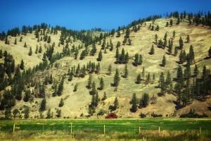 montana-395438_640