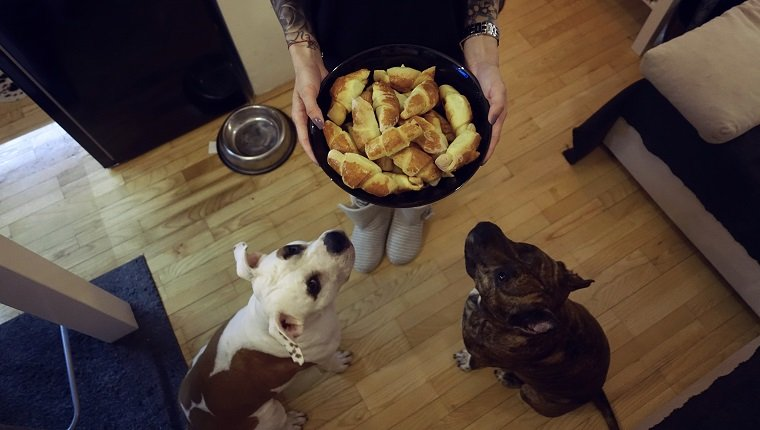 Jesus and Gentiles: Dogs and Bread