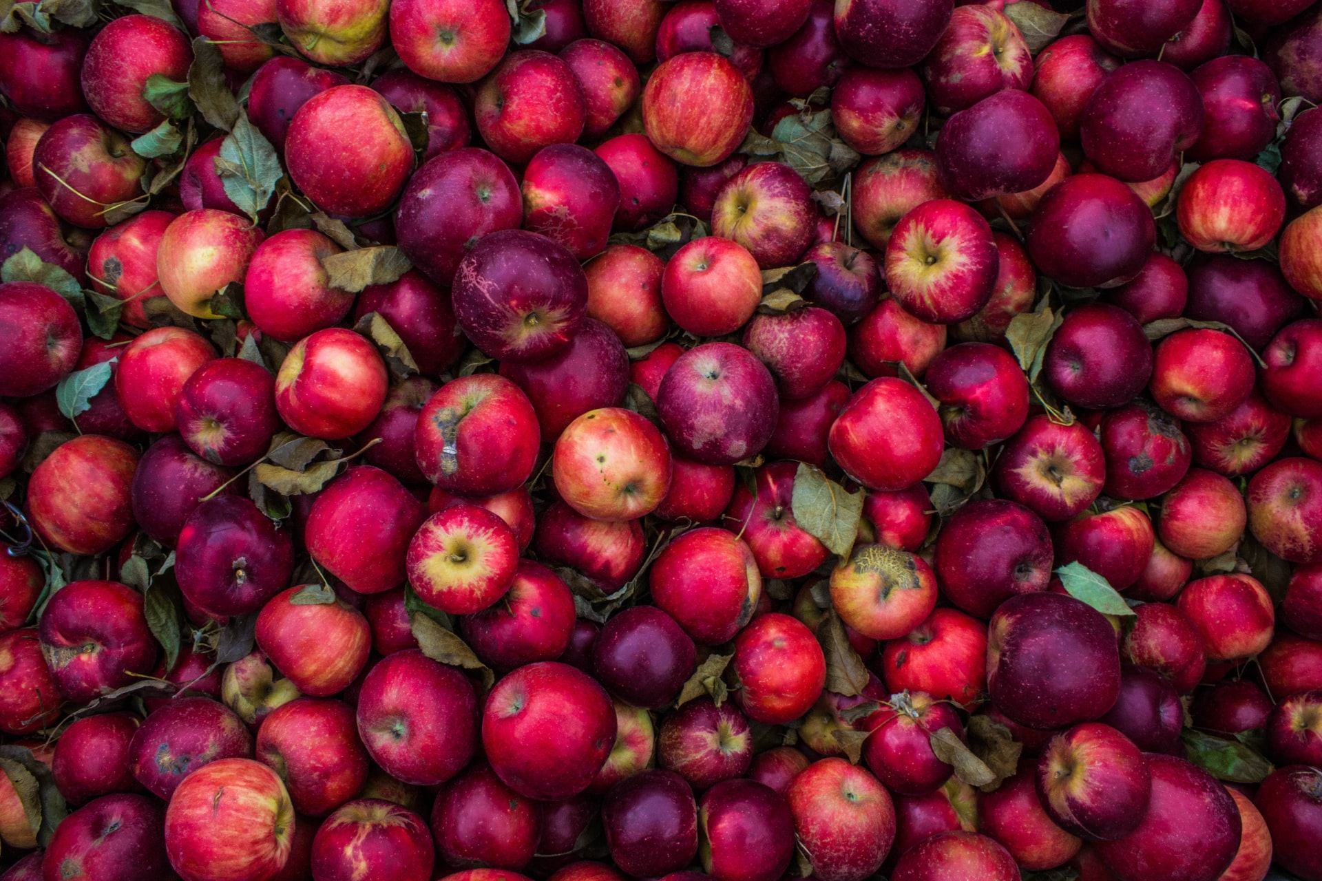 The Sabbath, Food, and Creation Care