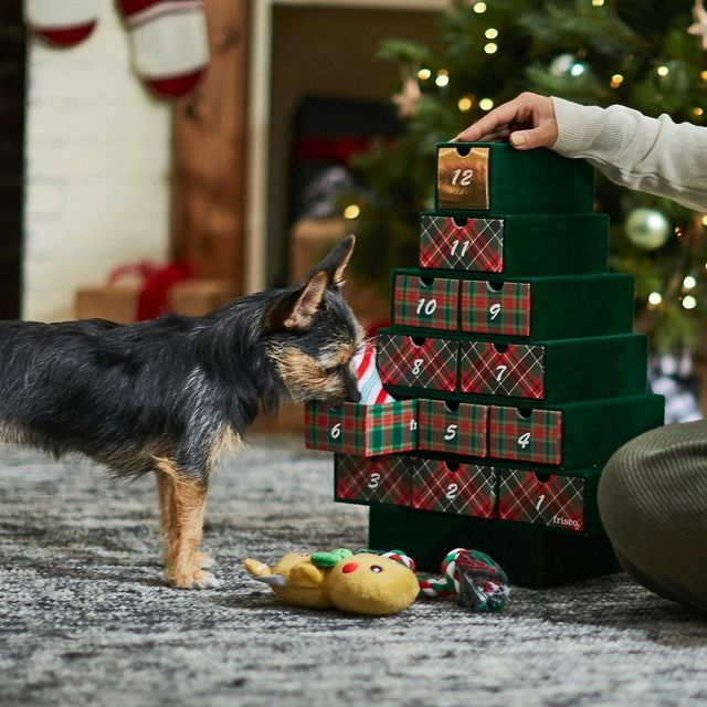 This image has an empty alt attribute; its file name is pet-advent-calendar-1605215336.jpg