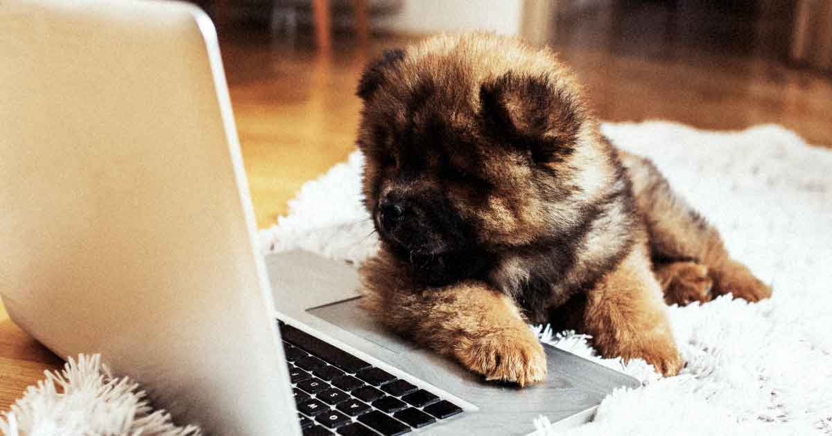 adorable puppy tries to read computer