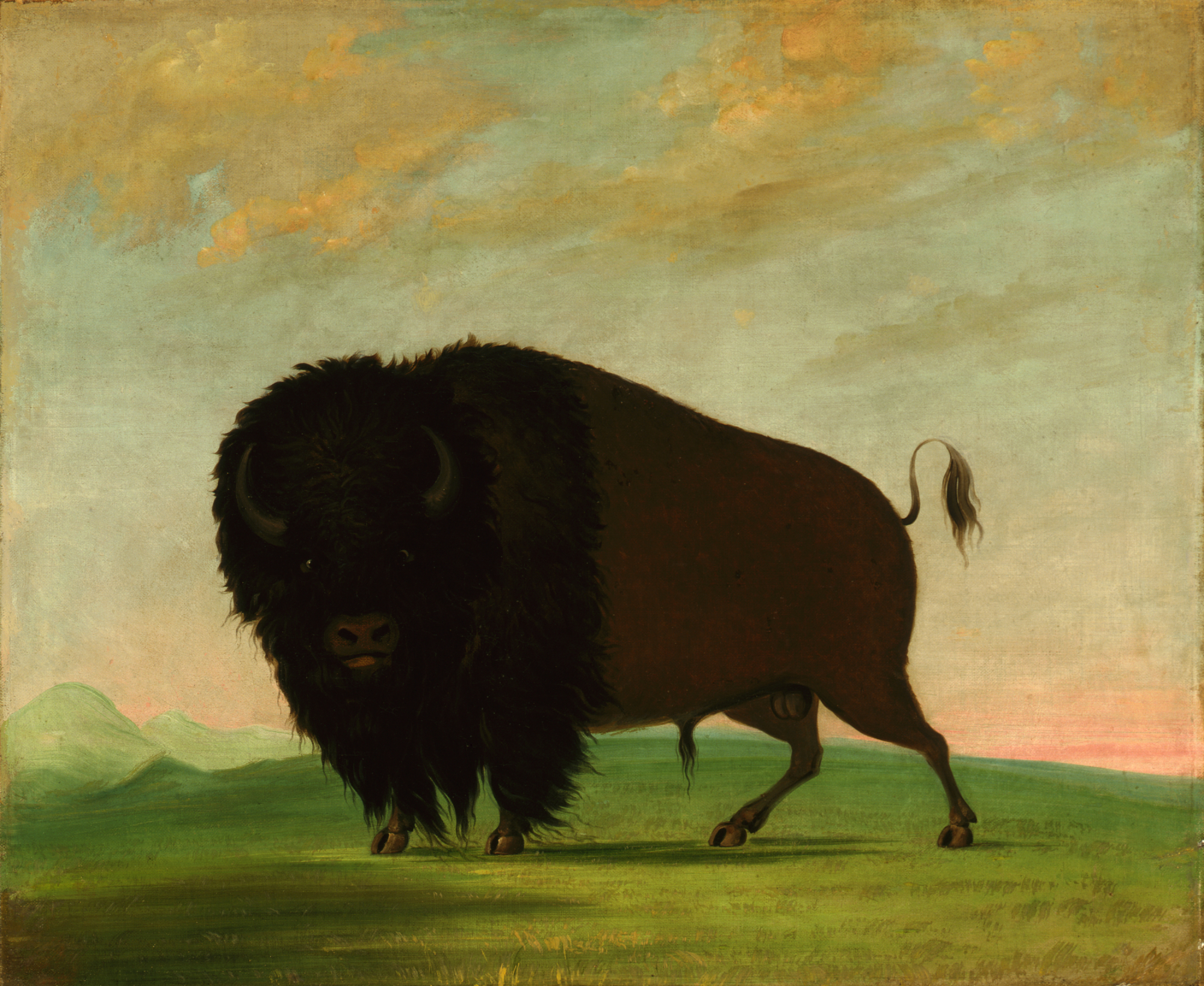 Picturing The American Buffalo George Catlin And Modern Native American Artists Smithsonian American Art Museum