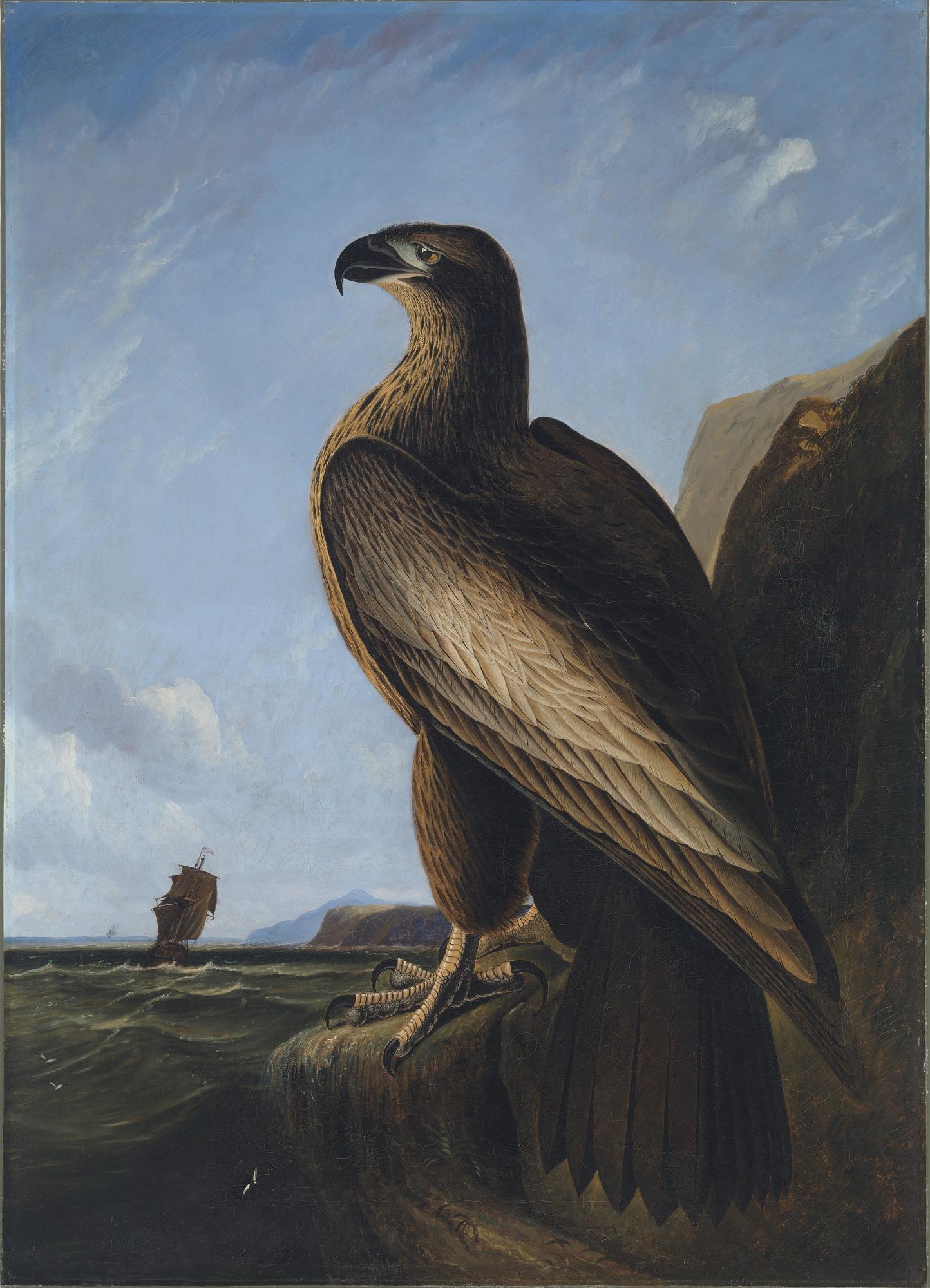 Washington Sea Eagle Smithsonian American Art Museum