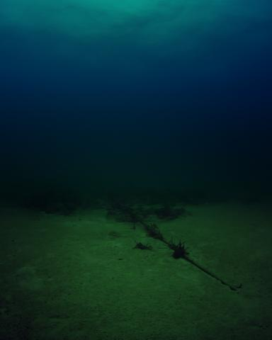 A photograph of the bottom of the Atlantic Ocean with a cable wrapped in algae.