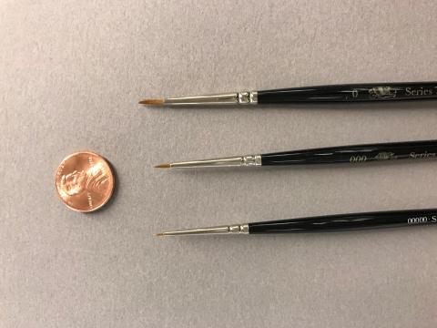 This is a photograph of three brushes with a penny to depict the small size of the brush hairs.