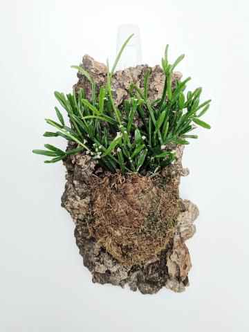 This is a photo of a green succulent mounted on a wall.