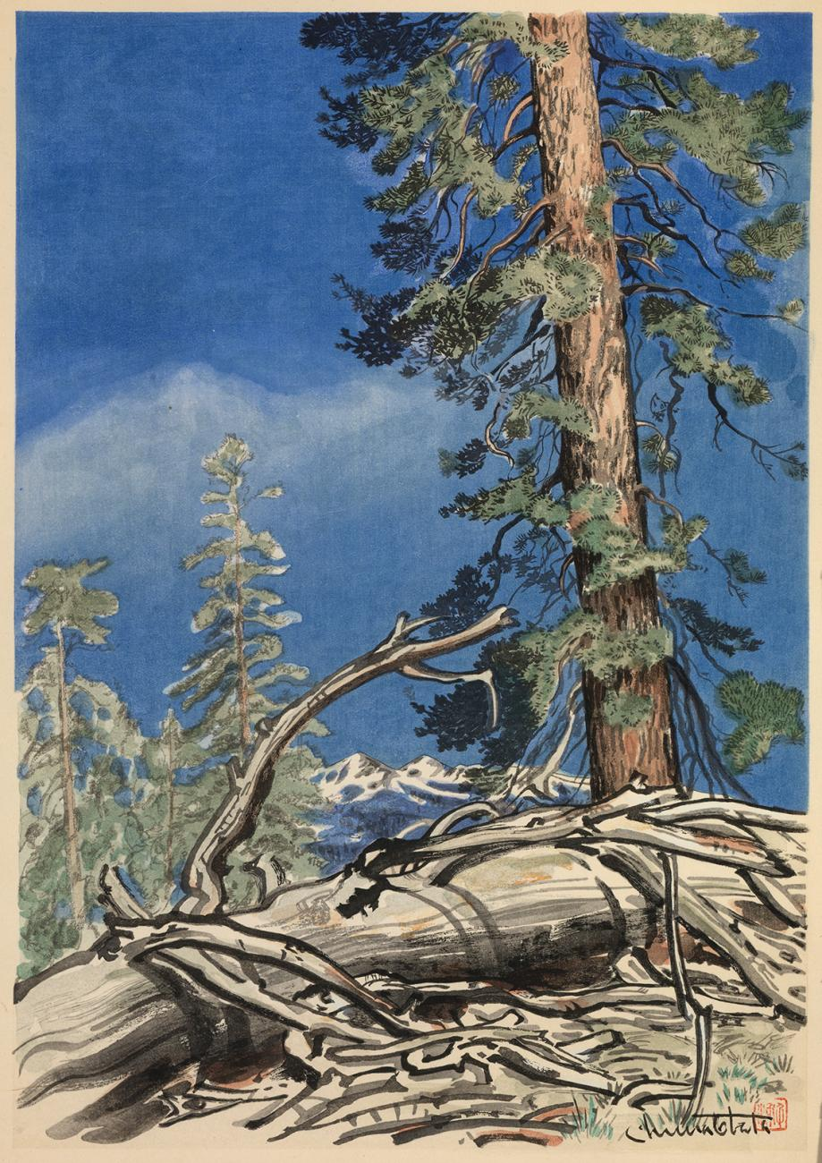 A watercolor of a fallen tree with trees and the blue sky in the background.