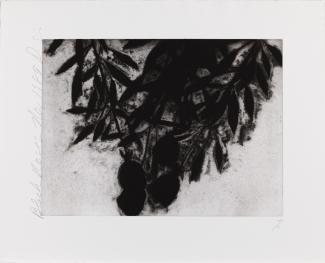 Untitled - 1992.25.1 - 72281