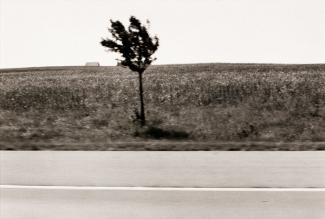 A photograph of a Illinois landscape with a tree taken by automobile.