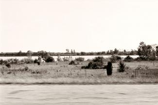A photograph of an Indiana landscape with shrubbery taken by automobile.