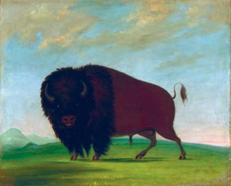 Catlin's oil on canvas of a buffalo in a field.
