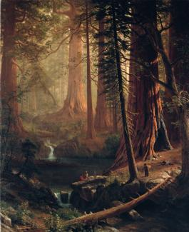 Beirstadt's oil on canvas of redwood trees in California.