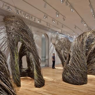 Exhibitions - Wonder, Dougherty square