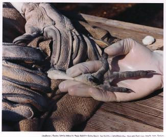 A photograph of a person's hand and a vulture's foot.
