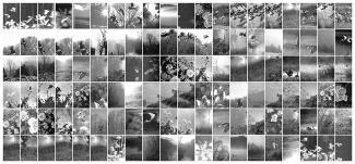 A collage of bird photographs.