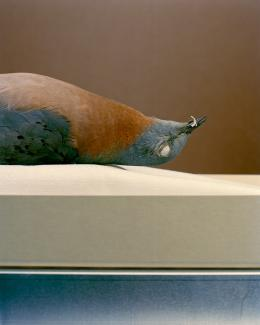 A detailed photograph of a dead bird on it's back.