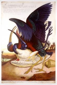 A painting of two birds fighting.