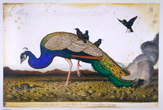 A painting of a peacock with black birds on its back and a fire in its back feathers.
