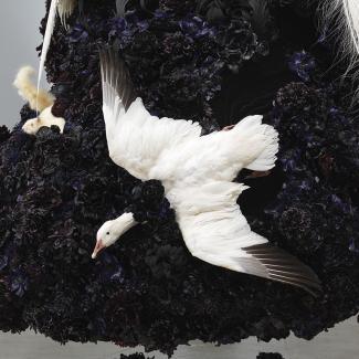 Exhibitions - Birds, Coyne, square