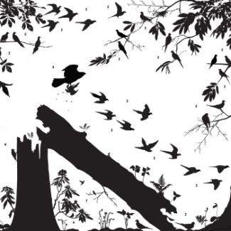 Exhibitions - Birds, Prosek, square