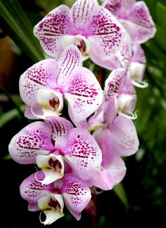 A photograph of purple and white orchids.