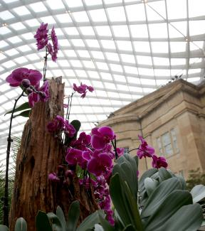 A photograph of purple orchids inside the Kogod Courtyard.