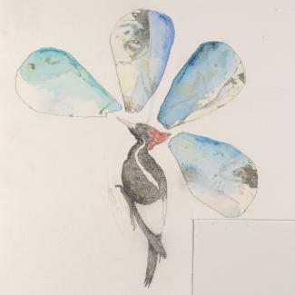 A drawing of a flower with a woodpecker as the stem.