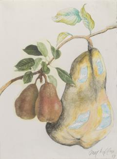 A drawing of three pears in a tree.