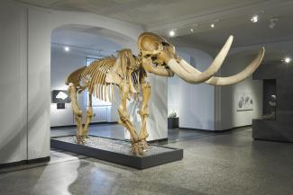 Exhibition - Humboldt, Skeleton of the Mastodon, excavated 1801–2 by Charles Willson Peale, bone, wood, and papier mâché, approx. 118 × 177 × 65 in., Hessisches Landesmuseum, Darmstadt, Germany, Photo: Wolfgang Fuhrmannek, © Hessisches Landesmuseum Darmst