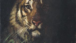 Blog - Tiger King, Featured Image