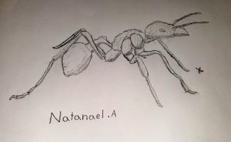 A drawing of an animal up close