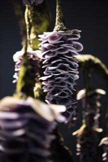 An artwork that looks like a flower