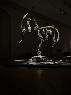 An installation photograph of a tree