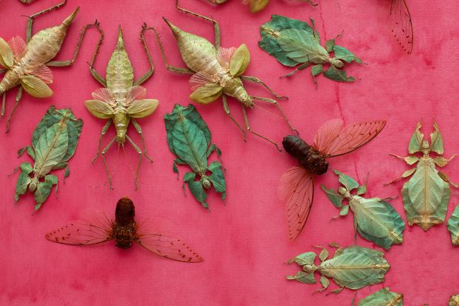 A close up of a pink wall with bugs displayed for the WONDER exhibition at the Renwick Gallery. (7 of 18)