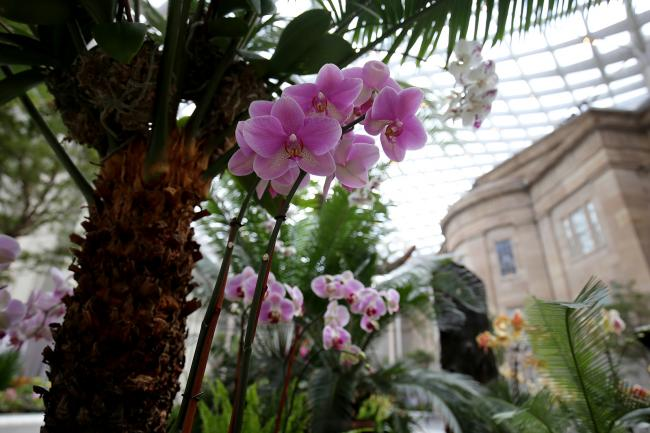 A photograph inside the Kogod Courtyard of orchids in various colors.