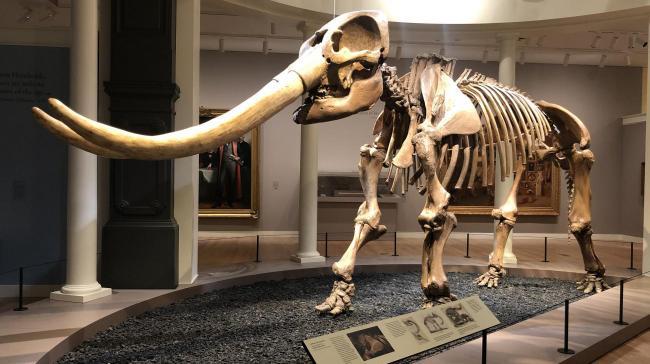 Blog - Mysteries of the First Mastodon