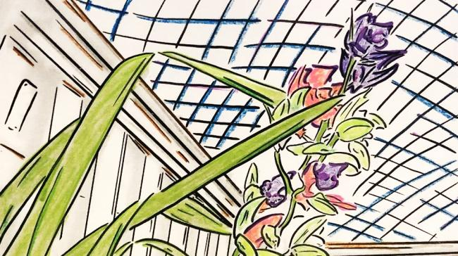 A contour line drawing of an orchid that's colored