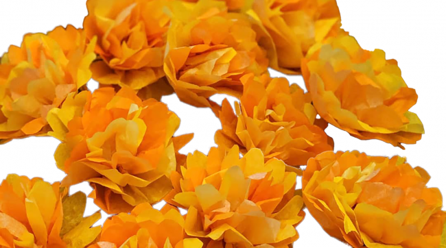 A group of paper marigolds made out of tissue paper.