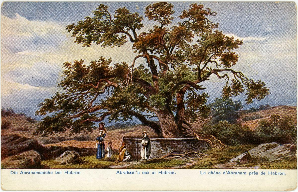 """A watercolor postcard from 1898 of """"Abraham's Oak at Hebron"""""""