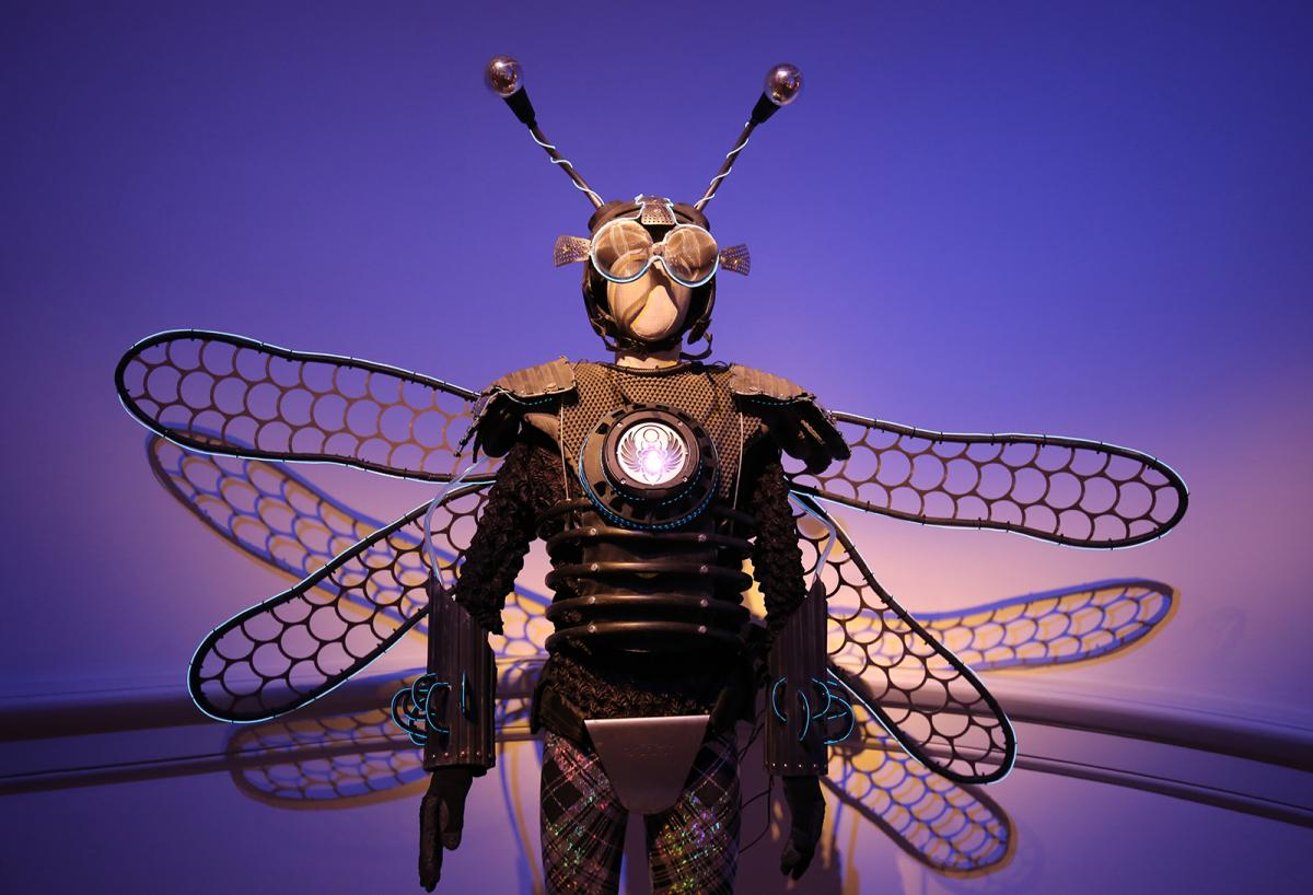 A photograph of an insect costume that has a helmet with antennas and wings on it's back.