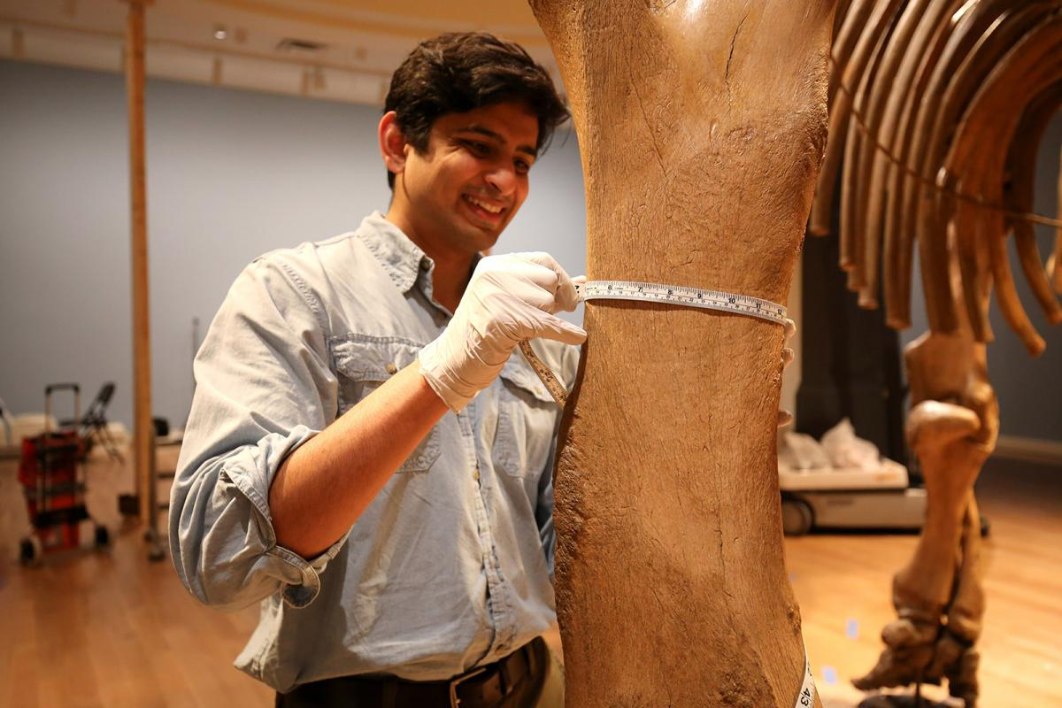 A photograph of a man standing next to a mammal leg measuring it.