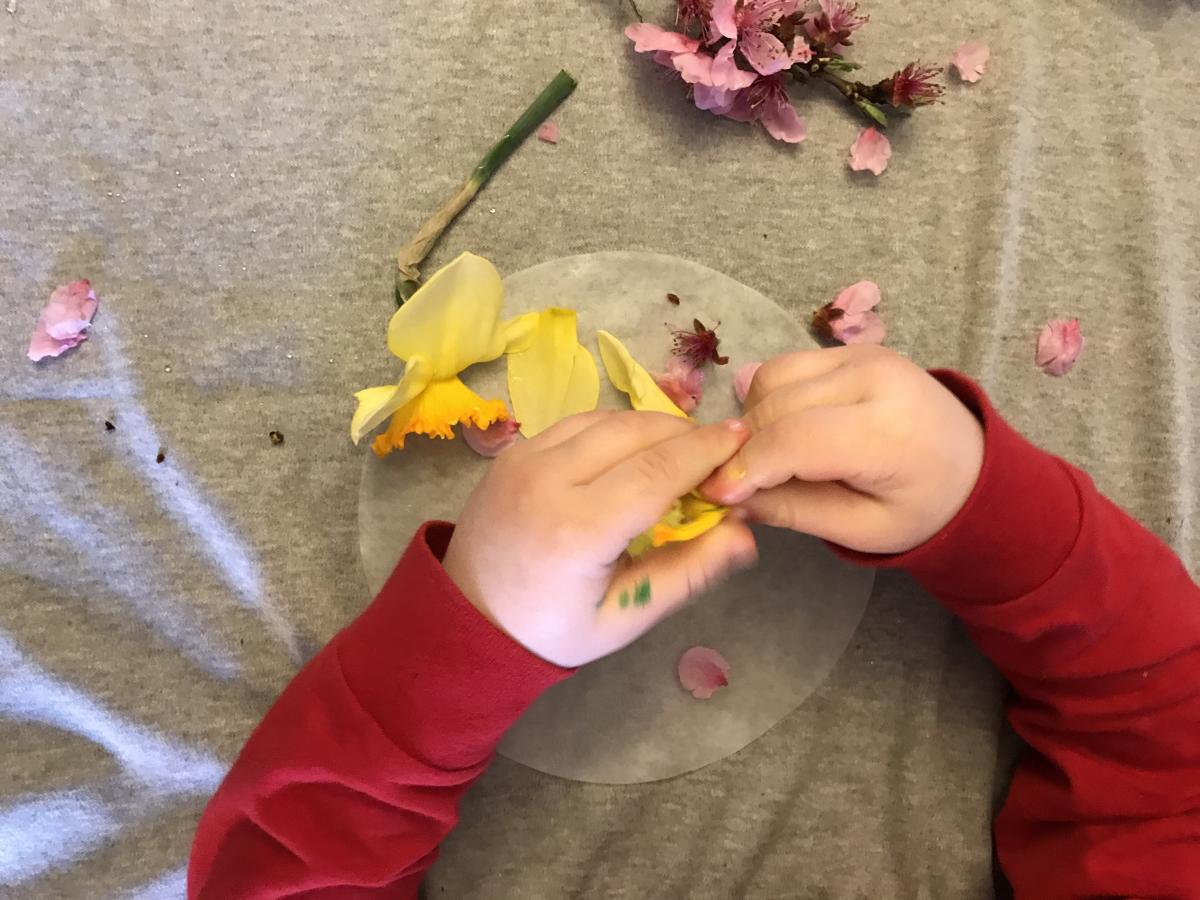 A child's hands pulling apart flowers