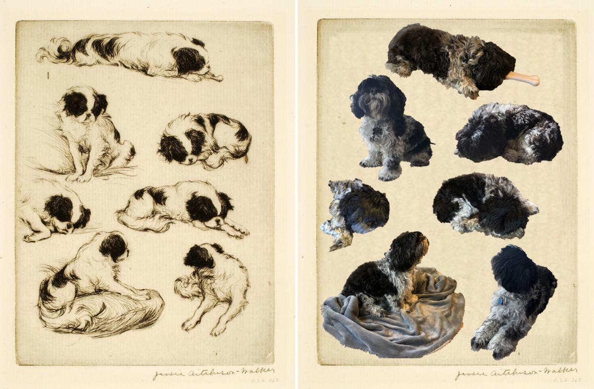 A recreation of a drypoint study of a dog by Jessie A. Walker.