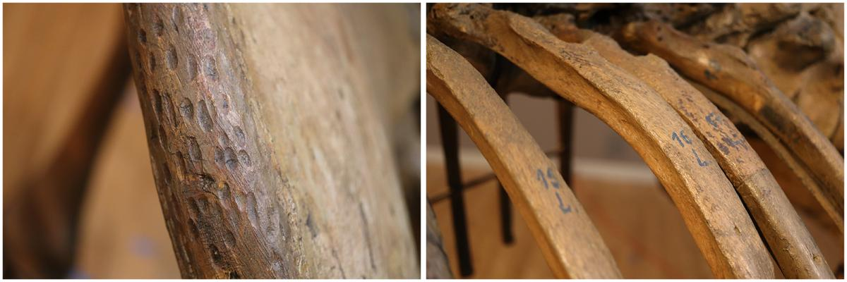 On left, close-up image of grooves in wood; on right, close-up image of numbers on mastodon ribs