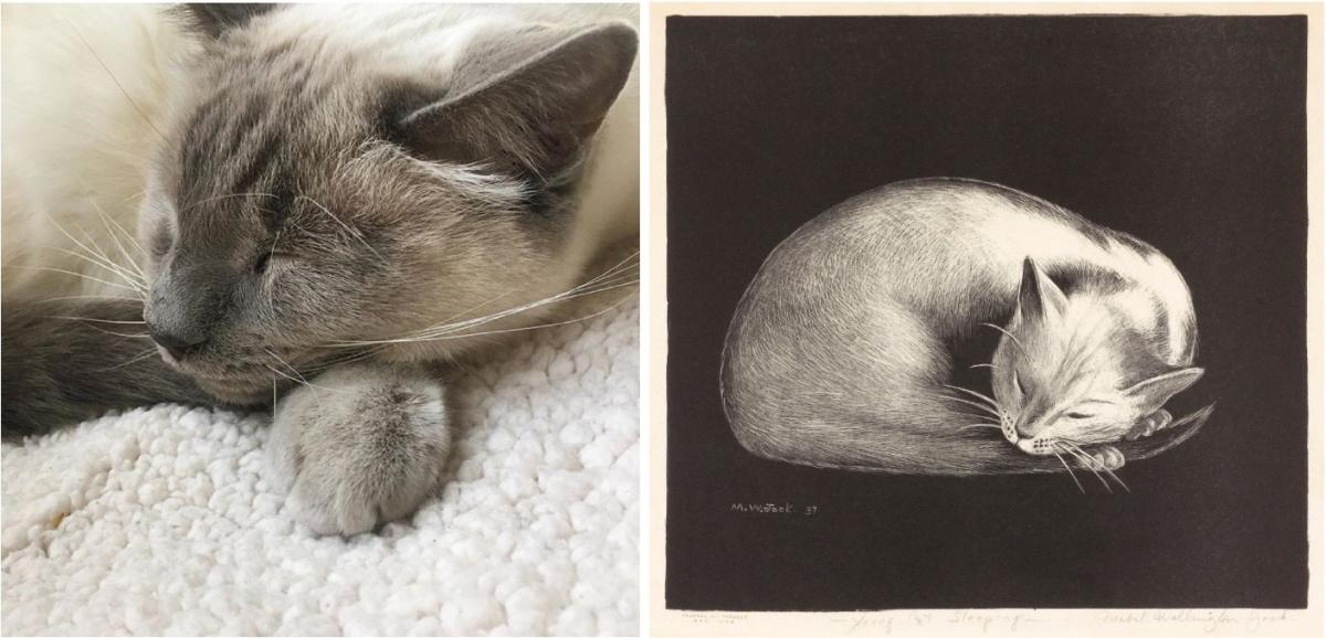 A recreation of a painting by Mabel Wellington Jack of a cat sleeping.