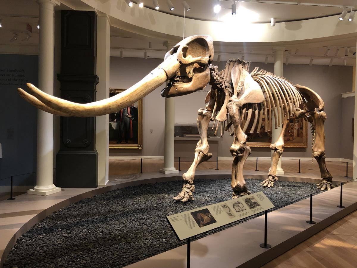 Mastadon in museum gallery with a bed of rocks underneath and a plaque on a railing in the foreground