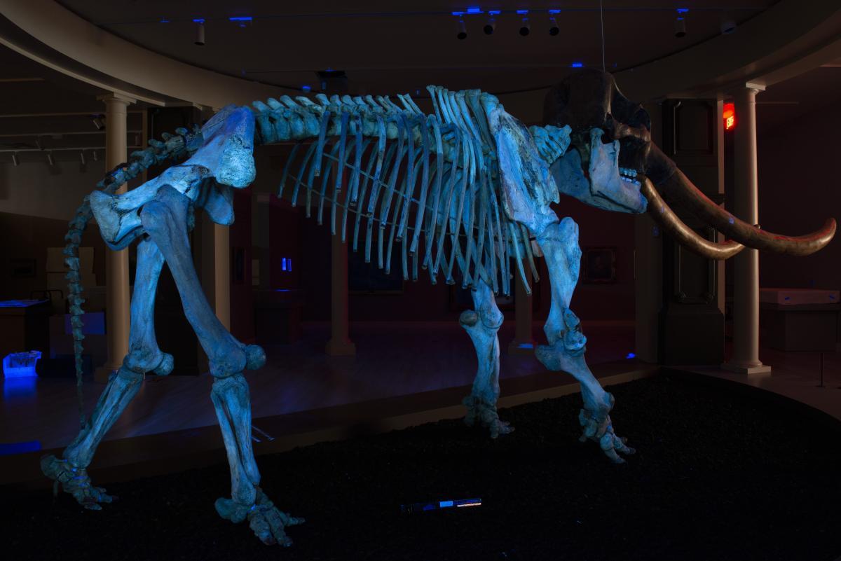 Full shot of mastodon in UV light revealing different materials on the surface